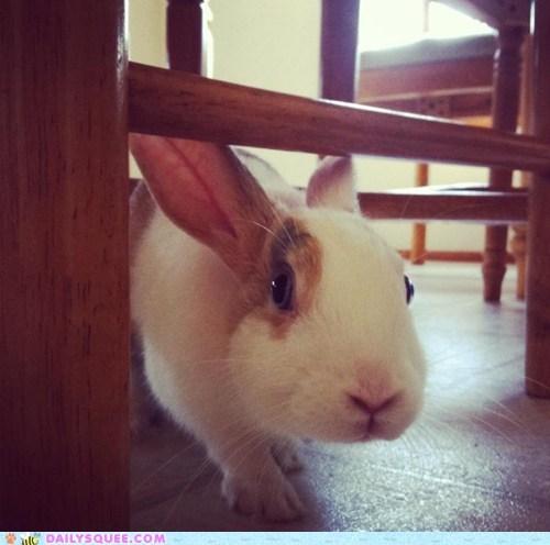 bunny happy bunday pet rabbit reader squee - 6392038400