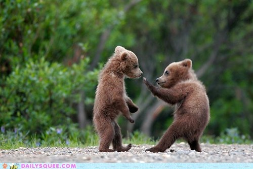 bear cubs squee kung fu playing