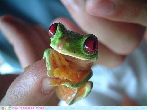 frog,tree frog,thumb,grasping,amphibian