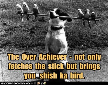 bird,dogs,over achiever,parrot,shish kebabs,stick,trick