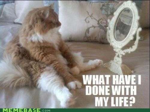 Cats,internet,lolcats,memecats,Memes,mirror