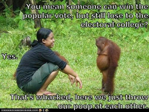 confusing,elections,orangutan,throwing poop,voting,whack