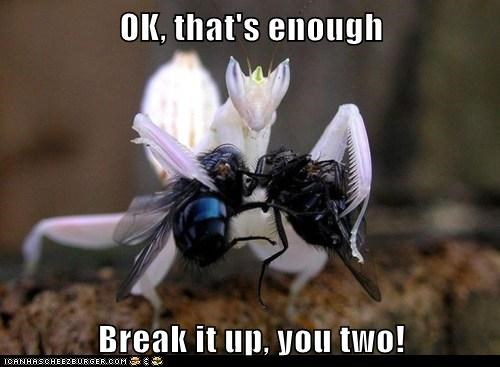 break it up eating enough fighting flies praying mantis - 6392405504