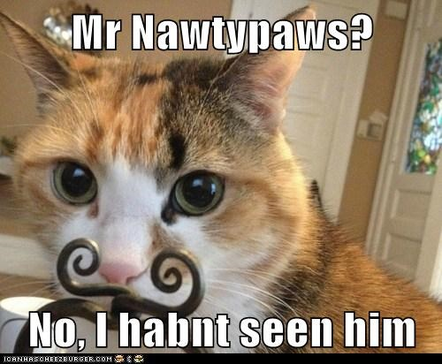 Mr Nawtypaws? No, I habnt seen him