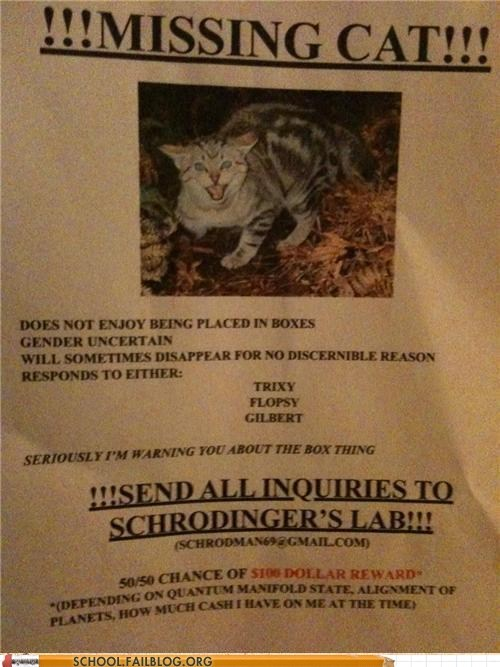 missing cat quantum mechanics schrodingers-cat - 6392631552