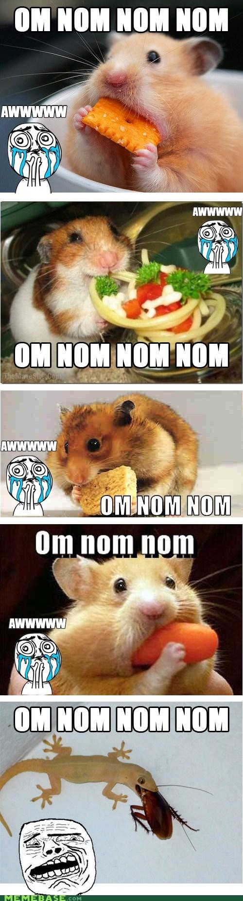 aw bugs cheese hamsters lizard Memes mice om nom nom sweet terror - 6392658688