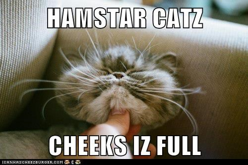HAMSTAR CATZ CHEEKS IZ FULL