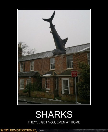 dangerous,hilarious,roof,sharks
