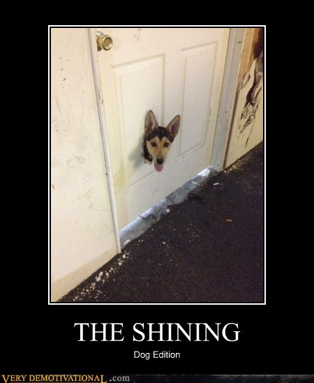 dogs,door,hole,Pure Awesome,shining