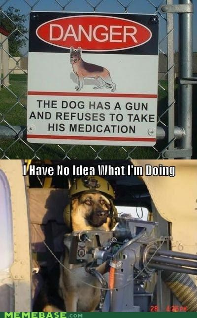 danger,dogs,gun,i have no idea,medication,Memes,zoloft