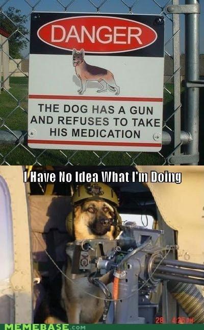 danger dogs gun i have no idea medication Memes zoloft - 6393257984