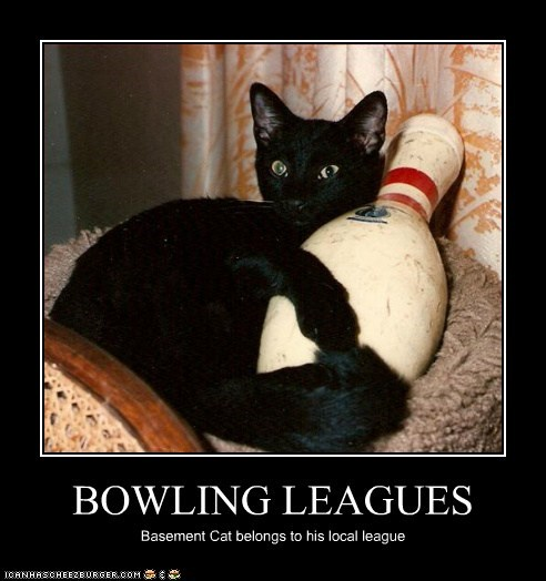BOWLING LEAGUES Basement Cat belongs to his local league