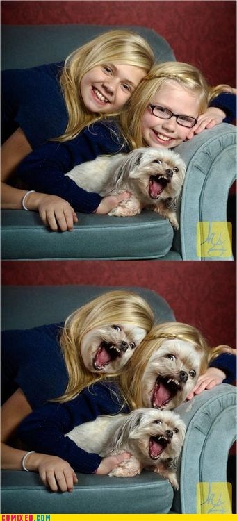 dogs family pictures nightmare fuel shopped pixels the internets - 6393433088