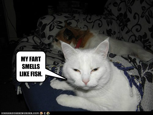 MY FART SMELLS LIKE FISH  - Cheezburger - Funny Memes | Funny Pictures