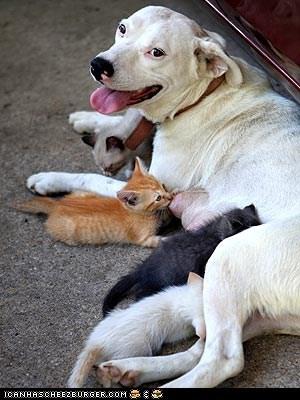 around the interwebs dogs Interspecies Love kitten people pets - 6393613312