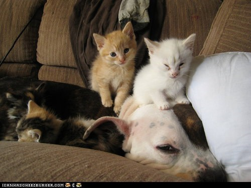 Cats dogs goggies r owr friends Interspecies Love kitten on top