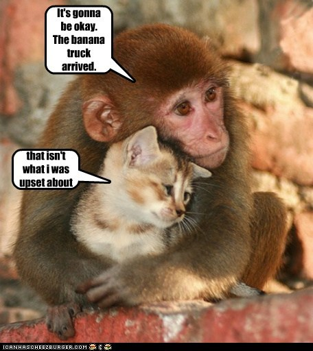 bananas cant-understand cat comforting connection hug monkey problems truck worried