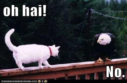 captions Cats eagle eagles fourth of july friends greetings independence day lolcats no ohai - 6393954816