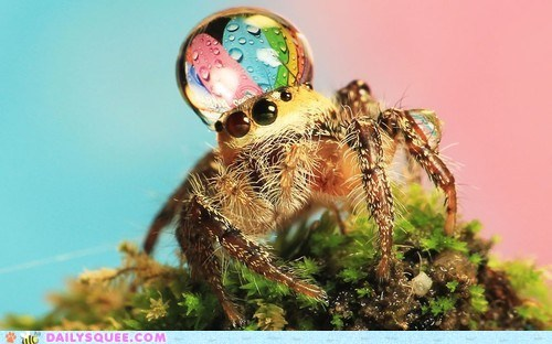 bug creepicute Hall of Fame hat rain raindrop spider spiders squee - 6393976576