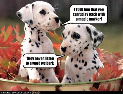 autumn dalmatian dogs fetch magic markers puppies spots - 6394379008