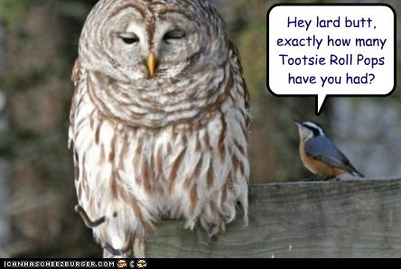 birds,commercial,fat,lard,Owl,tootsie roll pop