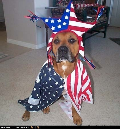 American Flag dogs dressed up fourth of july independence day patriotic what breed - 6394504960