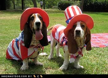 American Flag basset hounds costume dogs fourth of july independence day - 6394519040