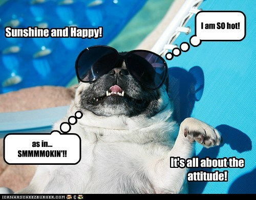 beach dogs happy hot pug summer sunglasses - 6394637056