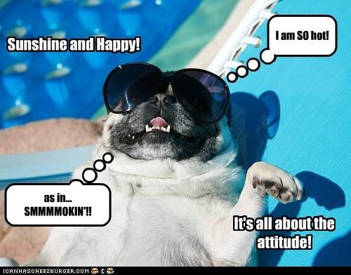 beach dogs happy hot pug summer sunglasses - 6394637056