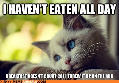 barf breakfast Cats eating first world cat problems First World Problems food Hall of Fame Memes throw up whining - 6394712832