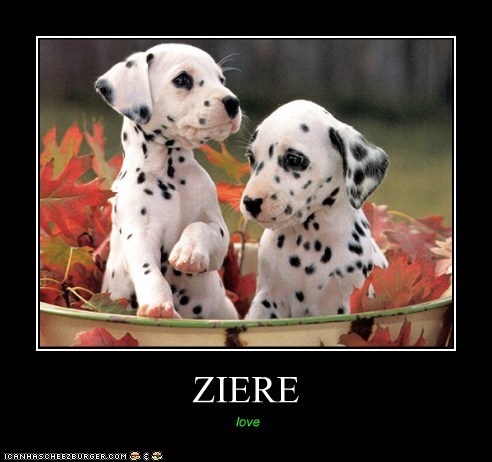 ZIERE love
