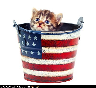 america,American Flag,buckets,Cats,cyoot kitteh of teh day,fourth of july,kitten