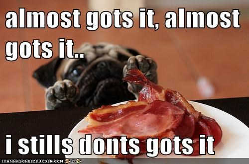 almost got it,bacon,captions,dogs,pug,So Close So Far