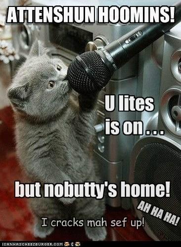 ATTENSHUN HOOMINS! U lites is on . . . AH HA HA! I cracks mah sef up! but nobutty's home! ATTENSHUN HOOMINS!