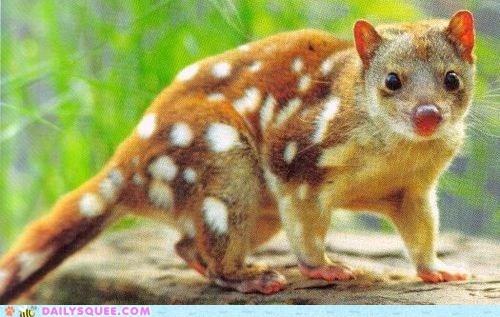 cat marsupial spots whatsit wednesday - 6395368960
