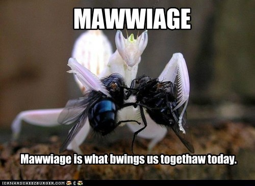 best of the week captions flies Hall of Fame mawidge preying mantis priest princess bride - 6395440384