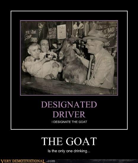 booze drinking goat hilarious wtf - 6395649280