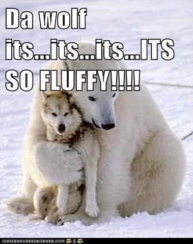 captions cute Fluffy hug love polar bear squeezing wolf