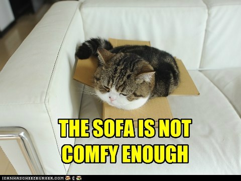 box,comfort,comfort is relative,comfy,couch,if it fits,sofa
