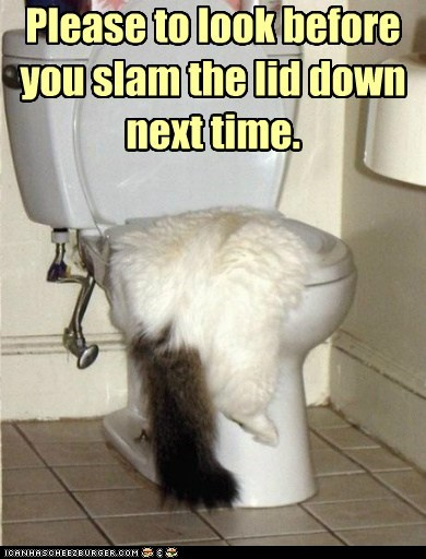 captions Cats flat lid slam toilet