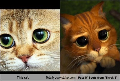 This Cat Totally Looks Like Puss N Boots From Shrek 2 Totally Looks Like
