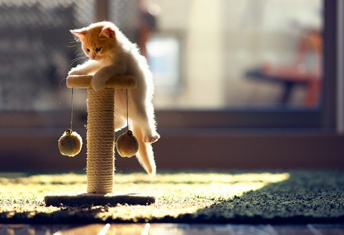 look at this climbing kit,look at this climbing kitten,scratching pole