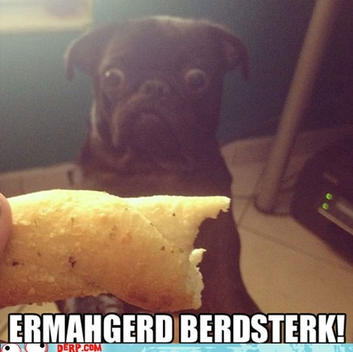 best of week,breadsticks,derp,Ermahgerd,food,goggie
