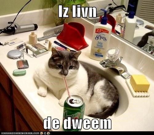bathroom,dream,living,lolcat,mountain dew,relaxation,sink,straw