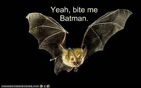 bat batman bite me fly unimpressed - 6396887040