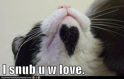 chin head heart lolcat love mark snub - 6397588736