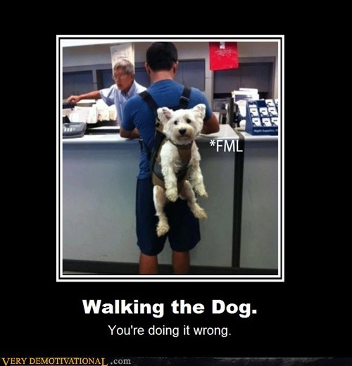 dogs,doing it wrong,hilarious,walking