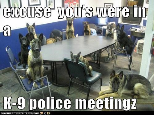 dogs german sheperd k-9 meeting room police officer