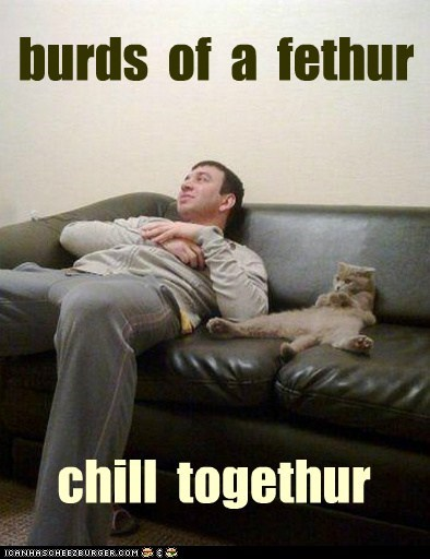 birds of a feather,chill,couch,friends,human,lazy,relax