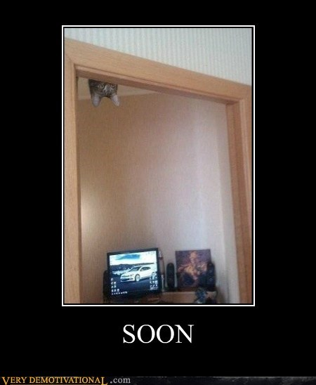 cat ceiling hilarious SOON - 6398374144